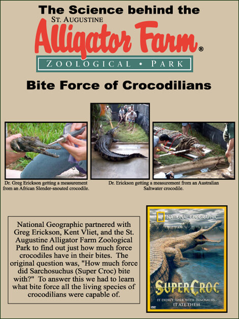 BiteForceofCrocodilians