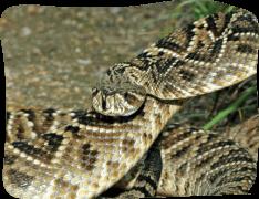 FULL SPECIES LIST – St  Augustine Alligator Farm Zoological Park