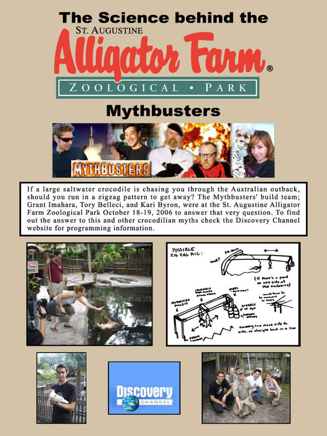 AlligatorFarm-Mythbusters